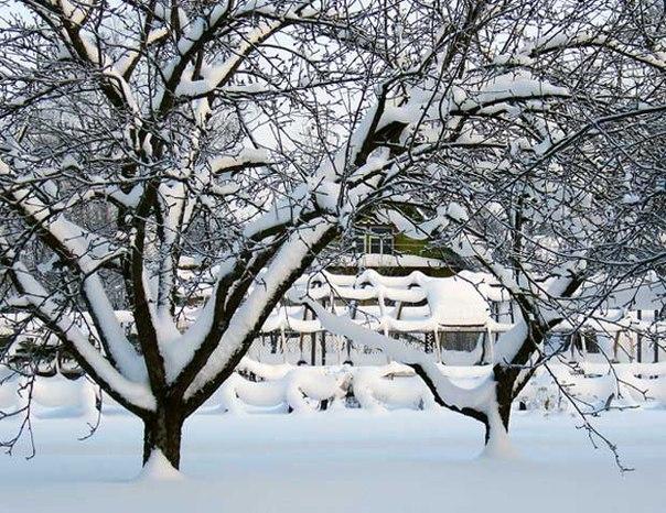 Дача зимой. Дача зимой 6