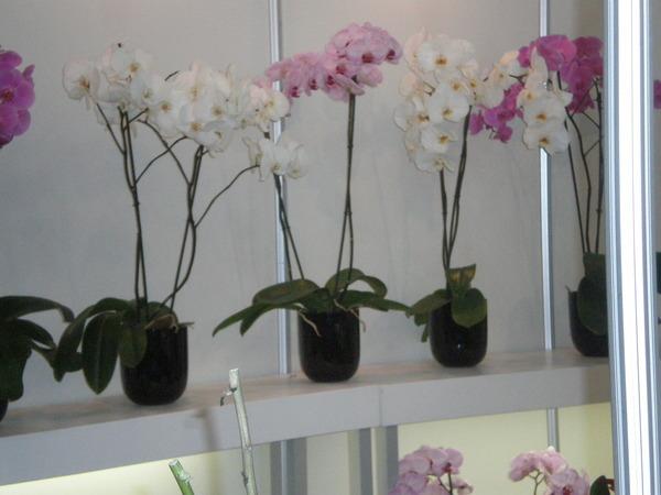Если вам подарили орхидею. 14038.jpeg
