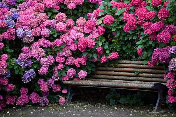 Кустарники, цветущие все лето