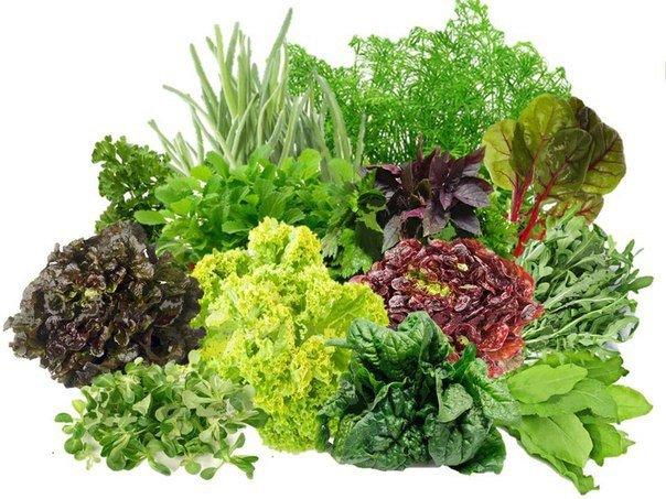 Как правильно сажать зелень
