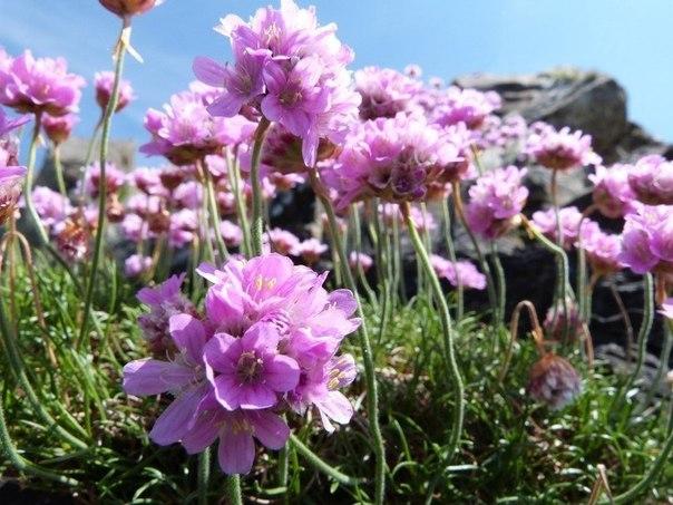 Они цветут все лето!