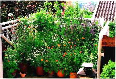 Для лентяев : выбираем самые неприхотливые садовые растения