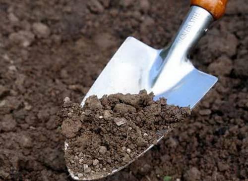 Как снизить кислотность почвы