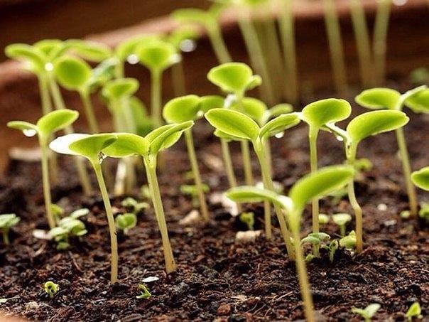 Подсказывает сама природа - когда что сеять