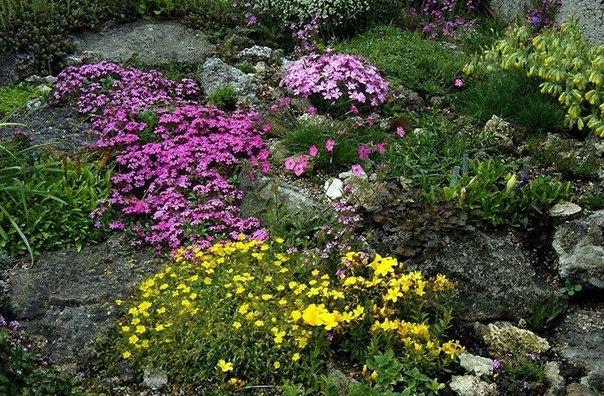 Украшаем в саду то, что нельзя украсить. Украшаем в саду то, что нельзя 4