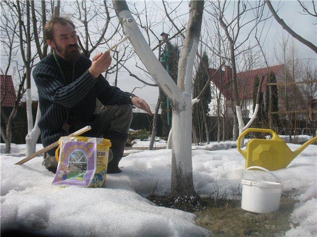 Срочно: что надо сделать в саду в марте. 14317.jpeg