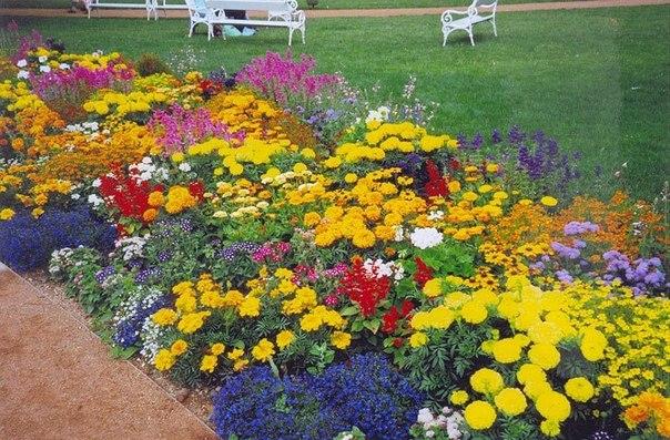 Цветы по срокам цветения