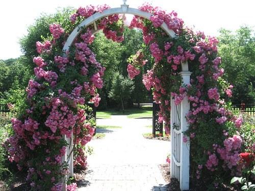 Делаем сами:Садовая арка с плетистыми розами. 14342.jpeg