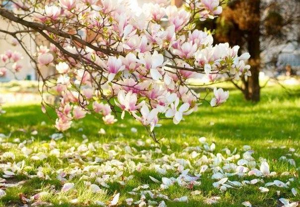 Май: работы в саду