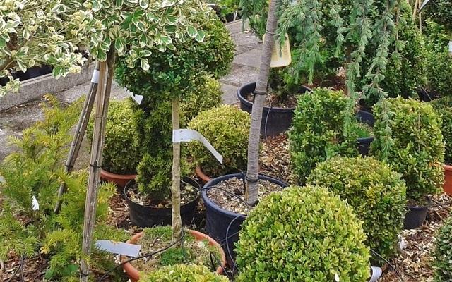 Семь шагов: Как сажать дерево или кустарник?. 14377.jpeg