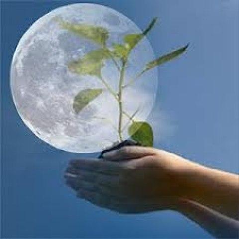Работы на огороде по Лунному календарю