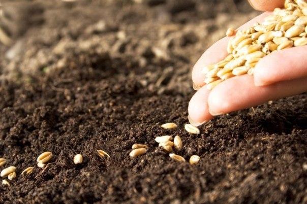 Как легко посеять семена в открытый грунт