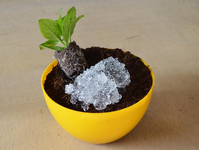 Как напоить растение , пока мы в отпуске? Берем гель из подгузника. 14485.jpeg