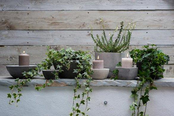 6 лучших растений для ленивых садоводов. английский плющ