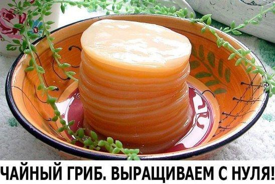 Чайный гриб. Выращиваем с нуля