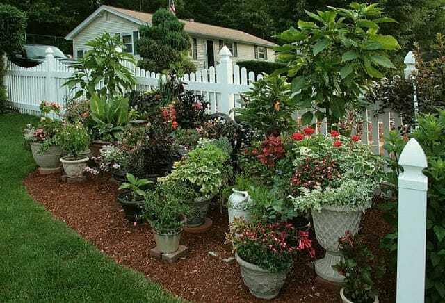 Несколько советов по контейнерному садоводству. 14587.jpeg