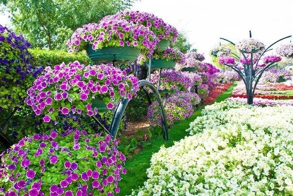 Формула обильного цветения ПЕТУНИИ. 13622.jpeg