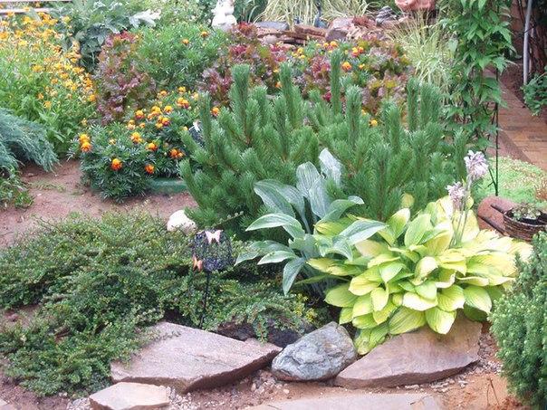 Какие декоративные растения противопоказано сажать вместе