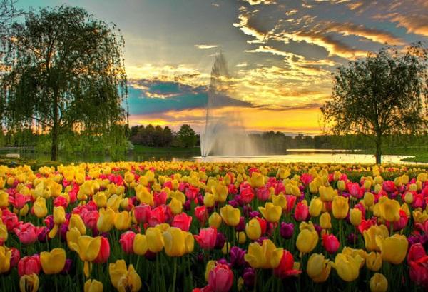 Удобрения для тюльпанов. 13721.jpeg