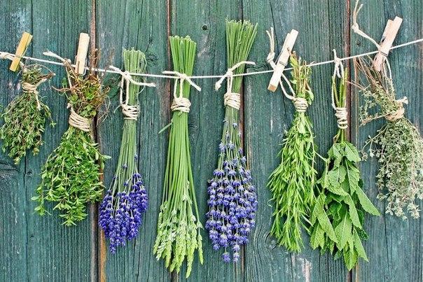 Как правильно высушить лекарственные травы, сохранив их целебные свойства?