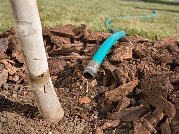 Подготовка плодовых деревьев к зиме. Подготовка плодовых деревьев к 3