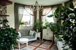 Выбираем растение солитер для комнаты.
