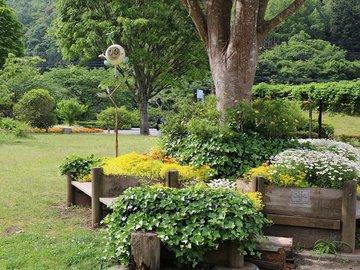 Уход за садом поздней весной и ранним летом