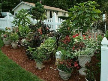 Несколько советов по контейнерному садоводству