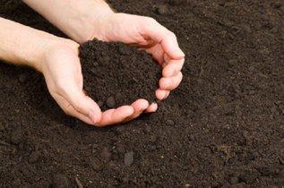 Как быстрее восстановить плодородие почвы