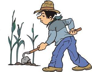 Исправляем ошибки в огороде и получаем урожаи