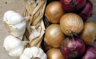 Особенности хранения лука и чеснока
