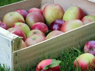 Сохраняем яблоки зимой: пять лучших способов