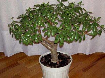Как правильно формировать денежное дерево?