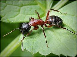 Топ 14 способов избавления от муравьев на даче