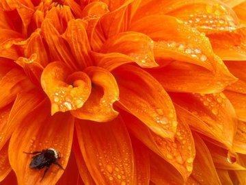 Цветотерапия оранжевым цветом в период менопаузы