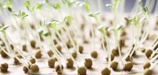 Пора сажать семена на рассаду. Какие и как?