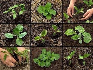 Уже март: Пора сажать овощи на рассаду