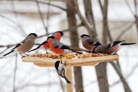 Кормление птиц зимой. Как помочь, а не навредить