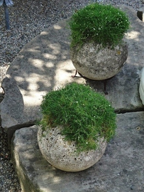 Найден заменитель газонной травы
