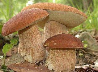 Как вырастить грибы на дачном участке?