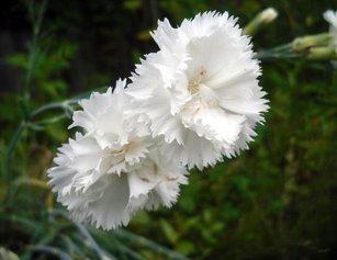 Восемь цветочных культур, которые сеют на рассаду в феврале