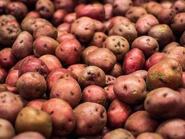 Апрель: время покупать картофель на посадку