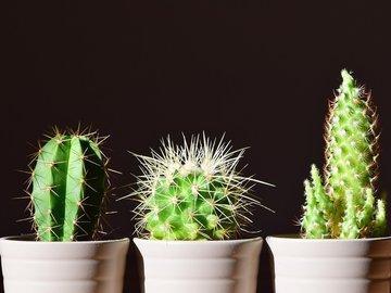 Пошаговая инструкция по пересадке комнатных растений