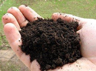 Как оздоровить и восстановить почву