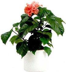 Пять комнатных растений-целителей